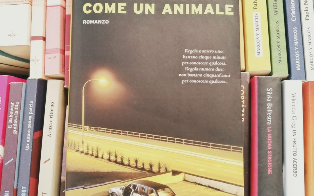 Come un animale